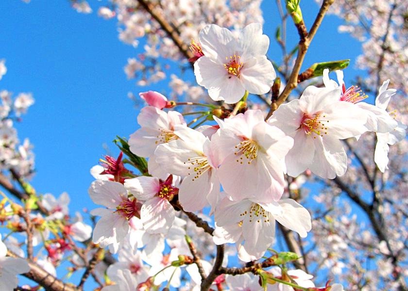 北海道観光情報|北海道内各地の観光情報サイト ツアーネット