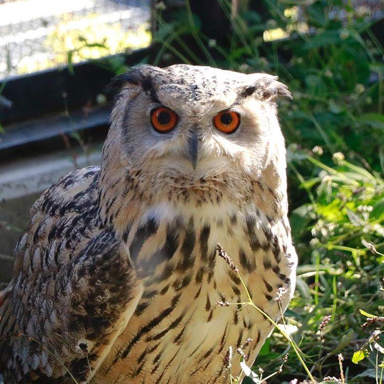 旭山動物園の動物|北海道産動物コーナーに行ってきました
