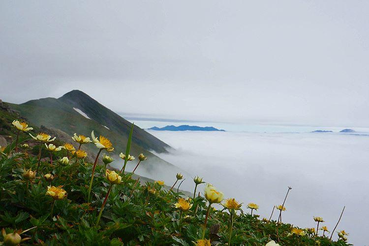 富良野の山
