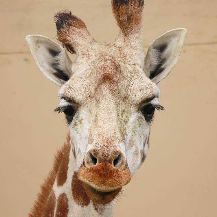 旭山動物園の動物|総合動物舎と動物資料展示館に行ってきました