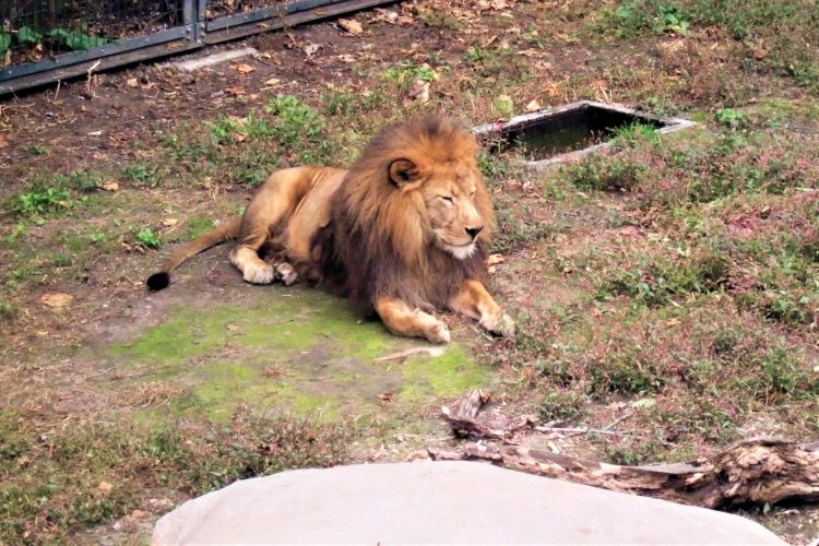 旭山動物園の動物|もうきん舎ともうじゅう館に行ってきました