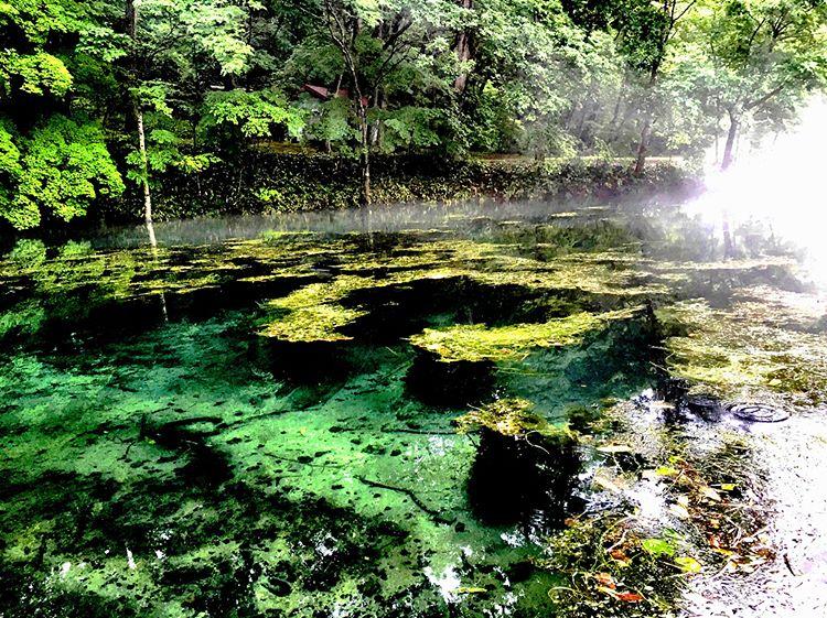 鳥沼公園で身も心もリフレッシュ!宝石の様に輝くエメラルドグリーンが魅力な鳥沼公園
