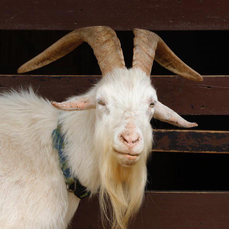 旭山動物園の動物|こども牧場とワピチ見学に行ってきました