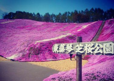 網走観光におすすめ!ひがしもことの芝桜公園